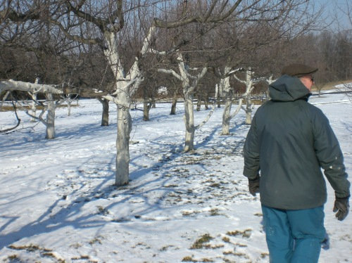 Mason Vollmer in the Camphill Soltane orchard.