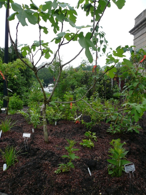 The USBG Orchard is an Edible Forest Garden.