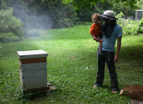 Backyard beekeeping in Germantown.