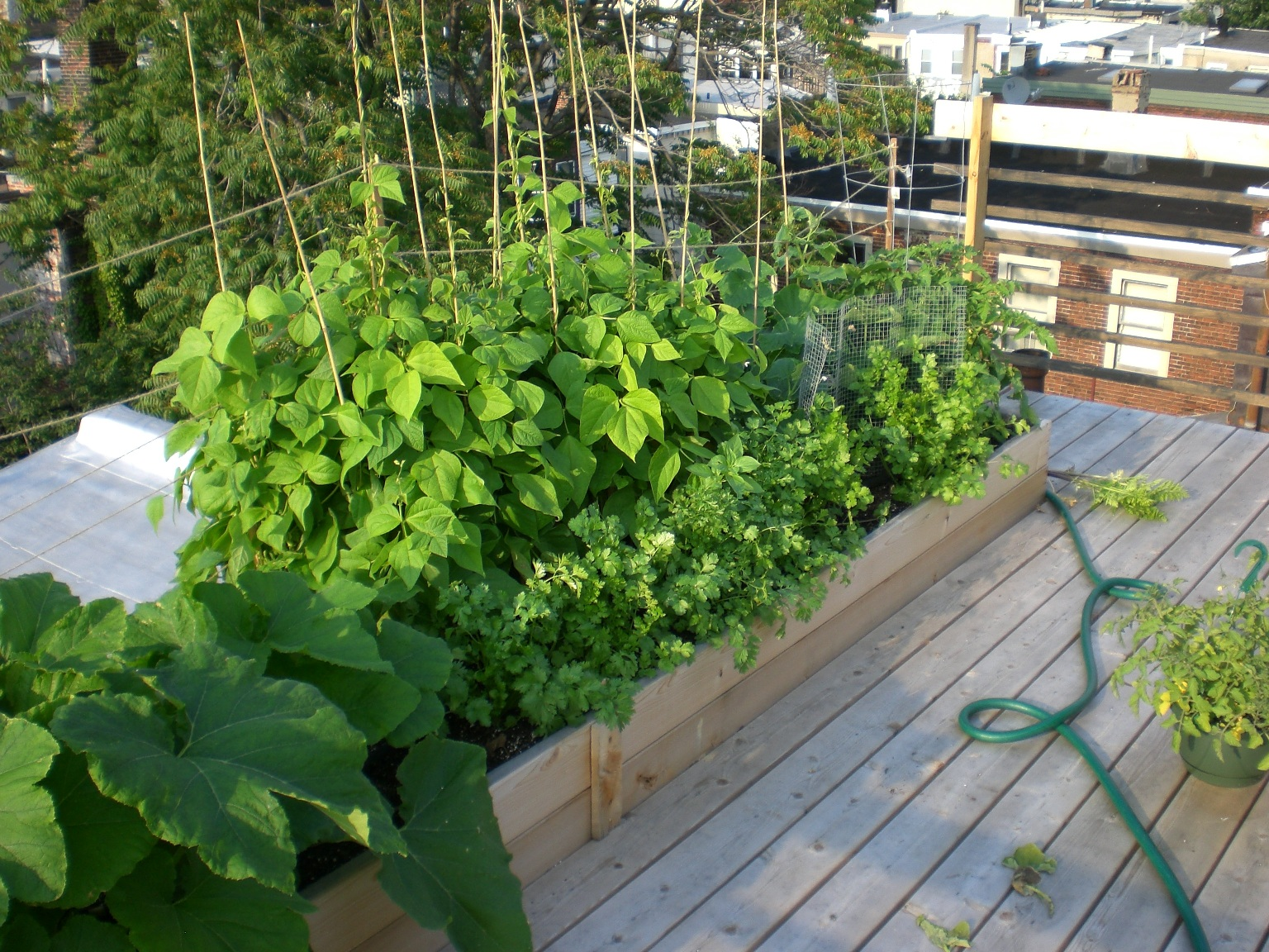 Amazing Rooftop Vegetable Garden Ideas Part - 11: Productive Rowhouse Rooftop Garden ...